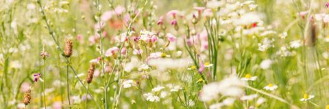 Flower meadow for insects, gardening with native and organic wildflowers royalty free stock photo