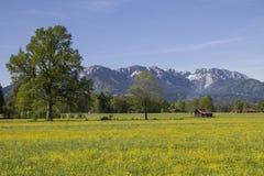 Flower meadow in Isarwinkel Royalty Free Stock Image