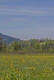 Flower meadow in Isarwinkel Stock Photography