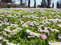 Flower meadow in Istanbul in front of Topkapi Palace Museum stock images