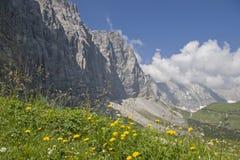 Flower meadow  in  Karwendel mountains Royalty Free Stock Image