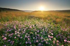Flower in meadow Stock Image