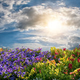 Flower meadow and majestic clouds Stock Photo