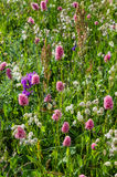 Flower meadow Stock Photography