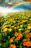 Flower meadow and rainbow Royalty Free Stock Photos