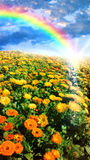 Flower meadow and rainbow Royalty Free Stock Images
