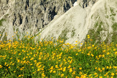 Flower meadow and rock face of mountain in spring. Flower meadow and rock face of mountain in background. Springtime or summer in the alps Stock Photo