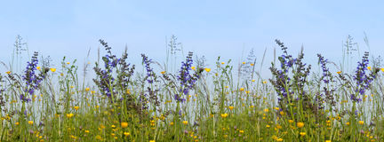 Flower Meadow with sage and grasses against a blue sky Royalty Free Stock Image