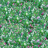 Flower Meadow Seamless Pattern. This image can be composed like tiles endlessly without visible lines between parts Royalty Free Stock Image