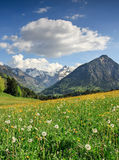 Flower meadow and snow covered mountains. Beautiful flower meadow and snow covered mountains in the background Royalty Free Stock Image