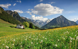 Flower meadow and snow covered mountains. Beautiful flower meadow and snow covered mountains and a cottage in the background Stock Photography