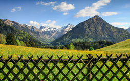 Flower meadow and snow covered mountains behind a wooden fence. Beautiful flower meadow and snow covered mountains in the background Stock Photography