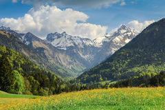 Flower meadow and snow covered mountains in spring. Royalty Free Stock Images