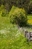 Flower meadow in South Tyrol Stock Photo