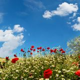 Flower meadow with blue sky. Flower meadow in spring with blue sky and white clouds Royalty Free Stock Images