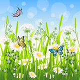 Flower meadow in summer Stock Photos