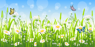 Flower meadow in summer Royalty Free Stock Images