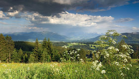 Flower meadow and thundery clouds in the mountains Stock Photos