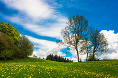 Flower meadow and trees. In spring Stock Photo