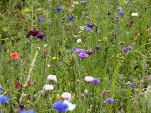 Flower, Meadow, Wildflower, Flora stock photography
