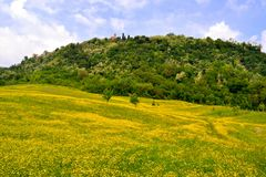 Flower meadows of the hills Royalty Free Stock Photography