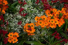 Flower medley mix with blue daisies, orange Star Of Bethlehems and red flowers. Flower medley mix with blue daisies, orange Star Of Bethlehems, green and red Royalty Free Stock Photos