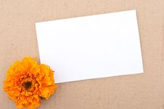 Flower with message-card Stock Photos