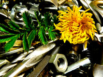 Flower metal Stock Photo