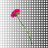 Flower in a metal wall Royalty Free Stock Photo
