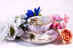 Flower Mice In tea cup Royalty Free Stock Photos