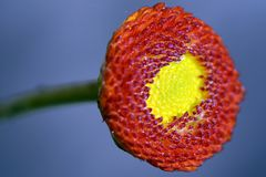 Flower-Micro Stock Images