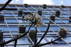Flower and Modernity. Bunch of flowers stands out in building with various air conditioners Royalty Free Stock Images