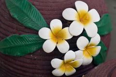 Flower molds. On the jar,Frangipani Royalty Free Stock Photography