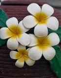 Flower molds. On the jar,Frangipani stock images