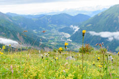 Flower at Mont Blanc Royalty Free Stock Photography