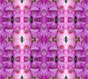 Flower mosaic. Of medical foxglove photo graphics Stock Image