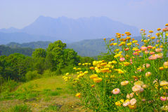 Flower and mountain Royalty Free Stock Photography