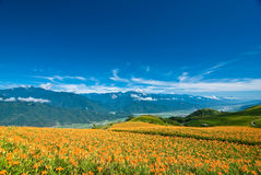 Flower in the mountain with beautiful cloudscape Stock Photography