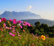Flower and mountain in Chiang Mai Thailand Royalty Free Stock Image