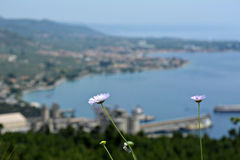 Flower. Of the mountain, in greece royalty free stock photos