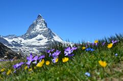 Flower, Mountainous Landforms, Wildflower, Mountain Stock Images