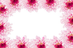 Flower mum frame Royalty Free Stock Photos