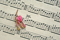 Flower on music sheet Stock Images