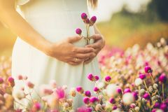 Flower of my life. royalty free stock photography