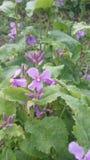 Flower05_Nanjing royalty-vrije stock foto's