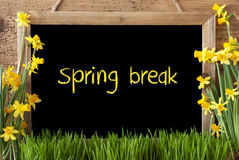 Flower Narcissus, Chalkboard, Text Spring Break. Blackboard With English Text Spring Break. Spring Flowers Nacissus Or Daffodil With Grass. Rustic Aged Wooden stock photos