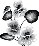 Flower of nasturtium Royalty Free Stock Photos