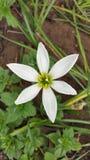 Flower, natural, blossom white. White bright flower Royalty Free Stock Image