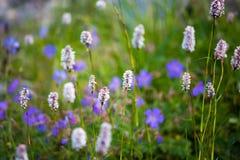 Flower natural short grass  background Stock Photos