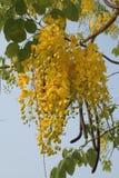 Flower. Nature backgroun Royalty Free Stock Image